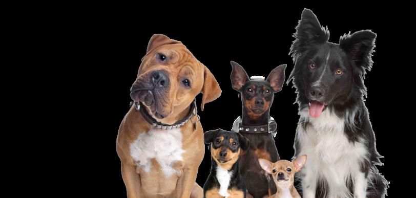 Tema hundtjänster