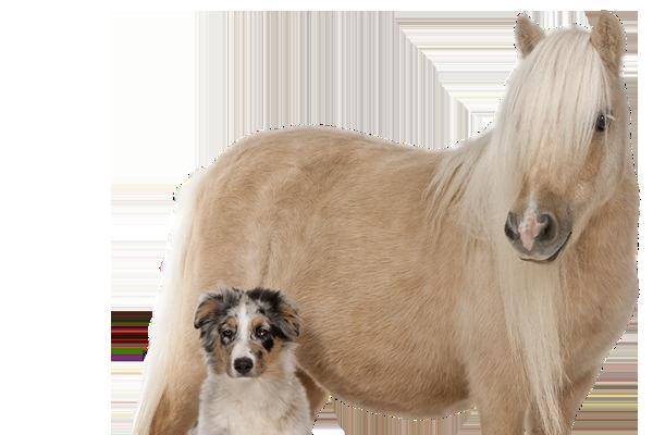 Djur & Husdjur